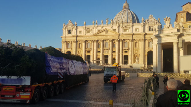 Choinka w Watykanie. Materiał reportera Kontaktu 24 (~Konrad.oswiecimka)