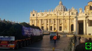Polska choinka już w Watykanie. Czekał na nią papież