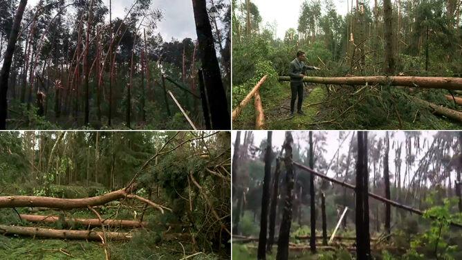 """W Dębnie mogła wystąpić trąba powietrzna. """"Drzewa zostały połamane jak zapałki"""""""