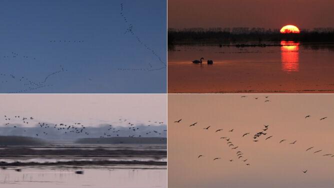 Ptaki czują wiosnę. Poruszenie w Parku Narodowym Ujście Warty