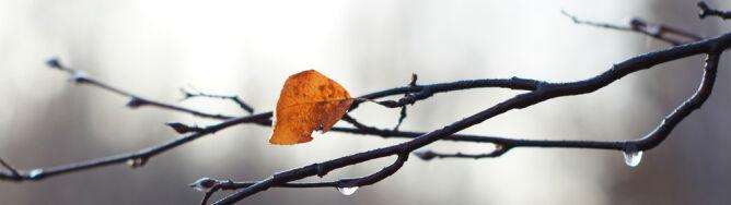 Prognoza pogody na dziś: w całym kraju pochmurno i deszczowo
